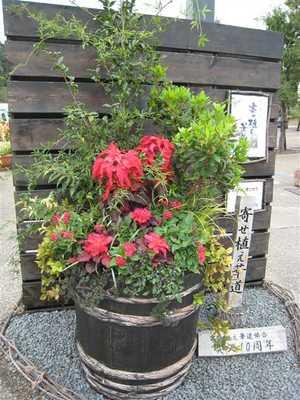花フェスタ記念公園 秋の大きな寄せ植え