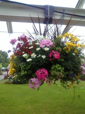 花フェスタ記念公園のハンギングバスケット