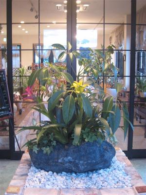観葉植物など岩の寄せ植え