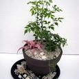 室内で楽しむ観葉植物の寄せ植え